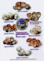 calendario2006